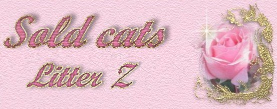 Sold cats - Z